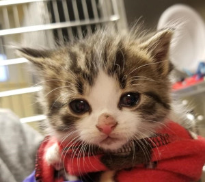 cutest cat ever Pawfficer Down   Serious Illness Sidelines Police Cat
