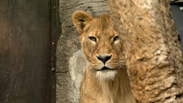(Credit: Dave Evans/ Shutterstock.com)
